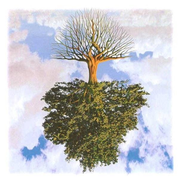 albero a rovescio