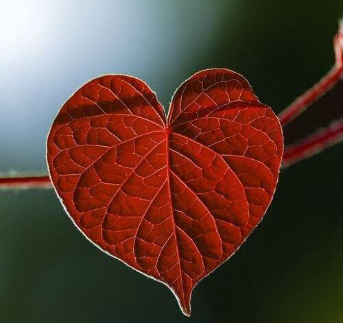 il linguaggio del cuore